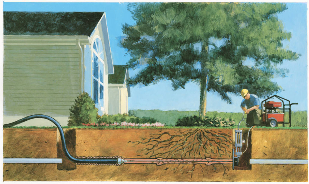 How Your Trees Are Affecting Your Plumbing Plumber